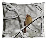 Cardinal Female 3652 Tapestry