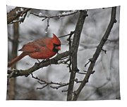 Cardinal Male 3666 Tapestry