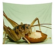 Cave Cricket Feeding On Almond 8 Tapestry