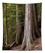 Cedar Trees, Whistler, British Columbia Tapestry