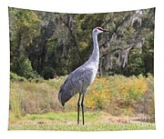 Central Florida Sandhill Crane With Oaks Tapestry