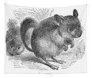 Chinchilla, 1873 Tapestry