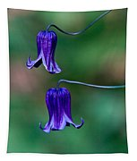 Clematis Integrifolia Rooguchi 2 Tapestry