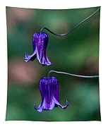 Clematis Integrifolia Rooguchi 3 Tapestry