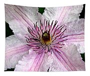 Spectacular Pink Clematis Tapestry