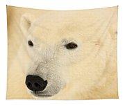 Close Up Of A Polar Bear, Churchill Tapestry