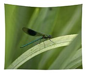 Close-up Of Dragonfly Perched On Leaf Tapestry