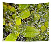 Closeup Of Morning Dew On Leaves Tapestry