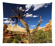 Cohab Canyon At Capitol Reef Tapestry
