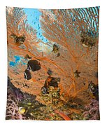 Collare Butterflyfish Tapestry