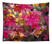 Color Tapestry