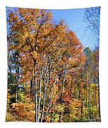 Colorful Tapestry