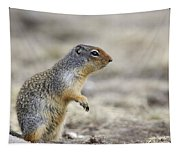 Columbian Ground Squirrel, Banff Tapestry