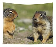 Columbian Ground Squirrels, Banff Tapestry