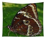 Common Morpho Tapestry