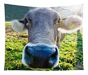 Cow In Backlight Tapestry