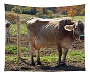 Cow Shadows Tapestry