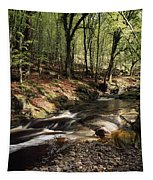 Creek In Woods, Cloughleagh, County Tapestry