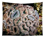 Curler Coral Tapestry