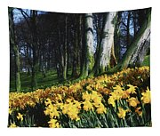 Daffodils Narcissus Flowers In A Forest Tapestry