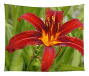 Day Lilly In Diffused Daylight Tapestry