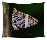 Dirce Beauty Tapestry
