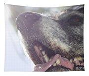 Dog In Backlight Tapestry