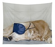 Dog Sleeping With A Sleep Mask Tapestry
