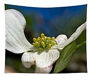 Dogwood Bloom Tapestry