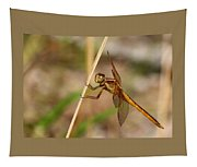 Dragonfly Looking At You Tapestry