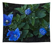Dwarf Balloon Flower Platycodon Astra Blue 2 Tapestry