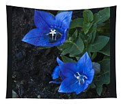 Dwarf Balloon Flower Platycodon Astra Blue  Tapestry