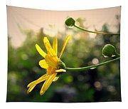 Early Morning Daisy Tapestry