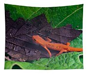 Easterm Newt Nnotophthalmus Viridescens 12 Tapestry
