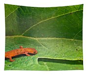 Easterm Newt Nnotophthalmus Viridescens 15 Tapestry