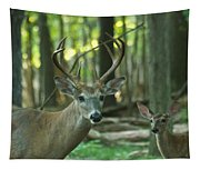 Eight Point And Fawn_9532_4367 Tapestry