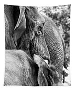 Elephant Ears Tapestry