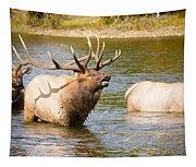 Elk Bugle Estes Lake Colorado Tapestry