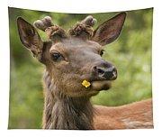 Elk Cervus Canadensis With Dandelion In Tapestry