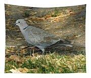 Eurasian Dove Tapestry