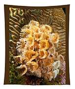 Featherduster Tapestry
