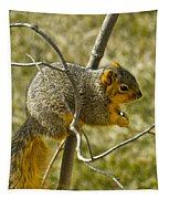 Feeding Tree Squirrel Tapestry