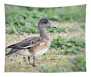 Female American Wigeon  Tapestry