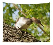 Female Hooded Merganser Tapestry
