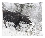 Female Moose In Snowy Forest, Gaspesie Tapestry