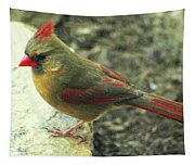 Female Northern Cardinal Tapestry
