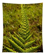 Fern Frond And Sporangia 1 Tapestry