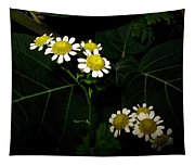 Feverfew In Bloom Tapestry