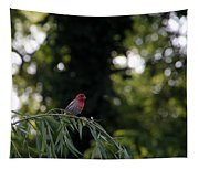 Finch In The Willow Tapestry