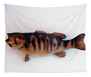 Fish Mount Set 11 A Tapestry